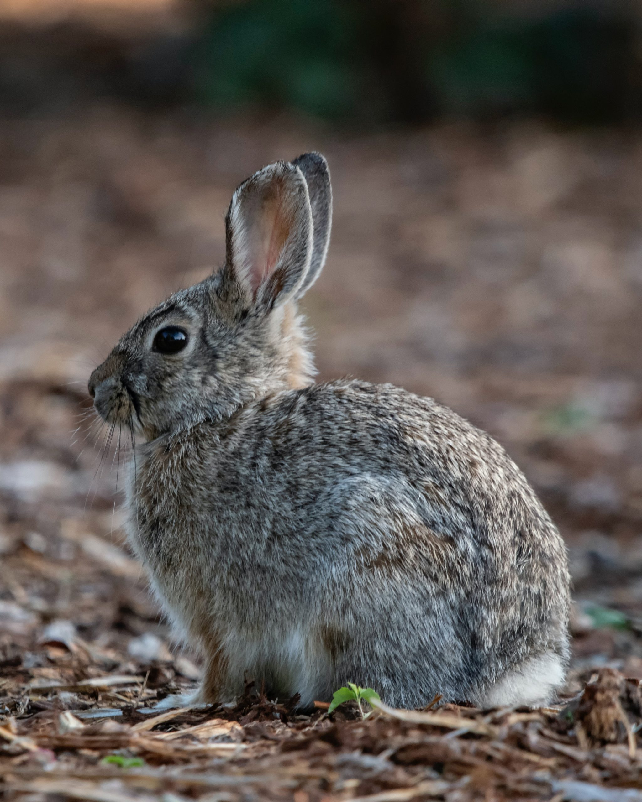 4 Vital Signs That Helps You Confirm Whether Your Rabbit Is Dead Or Alive!
